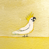 yellow-bird-(cockatoo)